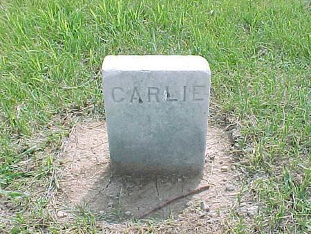 LAMM, CARLIE - Audubon County, Iowa | CARLIE LAMM