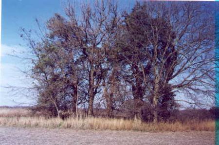 HOLMES FAMILY, CEMETERY - Jefferson County, Iowa | CEMETERY HOLMES FAMILY
