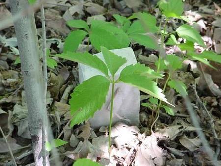 FOREST, UNKNOWN -6-2 - Pottawattamie County, Iowa | UNKNOWN -6-2 FOREST